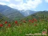 Долина Хаятсай. Нуратинские горы, Узбекистан