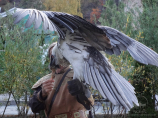 Pépinière Falcon Sunkar. Big Almaty Lake