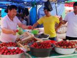 Спелая клубника в Узбекистане