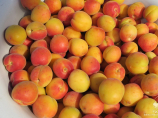 Спелый абрикос в Узбекистане